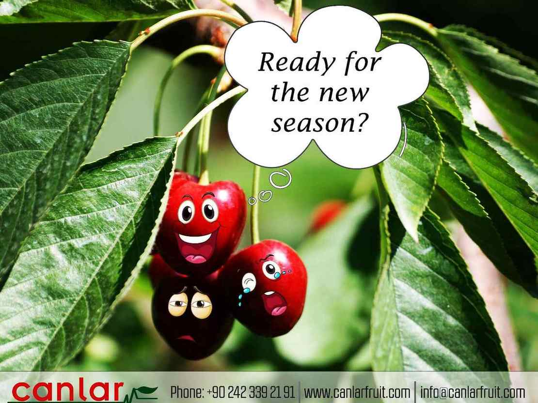 Are you ready for the new cherry season?