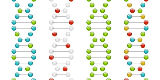 LIM-15 PCNA Gene Expression Test